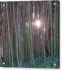 Bamboo And Ivy Acrylic Print