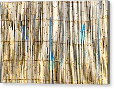 Bamboo Canes Acrylic Print by Tom Gowanlock