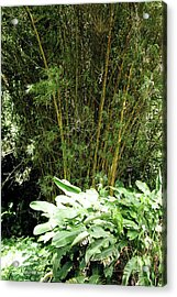 F8 Bamboo Acrylic Print by Donald k Hall