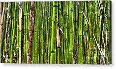 Bamboo Acrylic Print by Dustin K Ryan