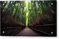 Bamboo Forest Acrylic Print by Heath Smith