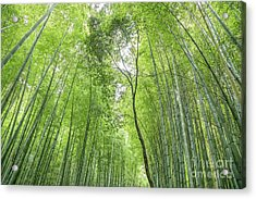 Bamboo Forest In Kyoto, Japan Acrylic Print