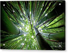 Bamboo Forest Maui  Acrylic Print by Monica and Michael Sweet