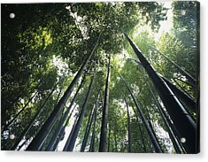 Bamboo Forest Acrylic Print by Mitch Warner - Printscapes