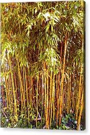Bamboo Grove Acrylic Print by Ann Johndro-Collins