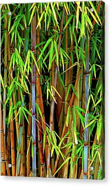 Acrylic Print featuring the photograph Bamboo by Harry Spitz