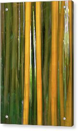 Bamboo Impressions Acrylic Print