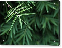 Bamboo Leaves Background Acrylic Print by Jingjits Photography