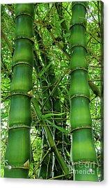 Bamboo Acrylic Print by Loriannah Hespe