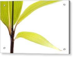 Bamboo Meditation 2 Acrylic Print
