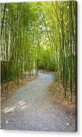 Bamboo Path 1 Acrylic Print