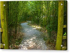Bamboo Path 2 Acrylic Print