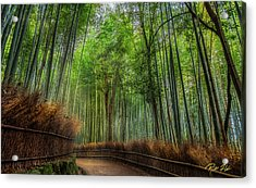 Acrylic Print featuring the photograph Bamboo Path by Rikk Flohr