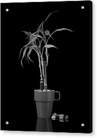 Bamboo Plant Acrylic Print by Tom Mc Nemar
