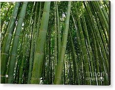 Bamboo Plantation Acrylic Print by Sami Sarkis