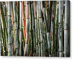 Bamboo Seduction Acrylic Print by Karen Wiles