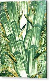 Bamboo Treasure Acrylic Print by Heather Hennick