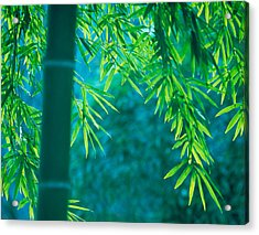 Bamboo Tree In A Forest, Saga Acrylic Print by Panoramic Images