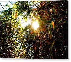 Bamboo Trees In Atlanta Acrylic Print