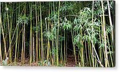 Bamboo Wind Chimes  Waimoku Falls Trail  Hana  Maui Hawaii Acrylic Print