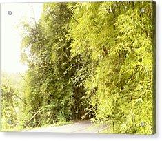 bambu en Limani, Adjuntas Acrylic Print