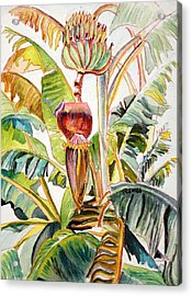 Banana Bloom Acrylic Print