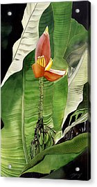 Acrylic Print featuring the painting Banana Blossom by Alfred Ng
