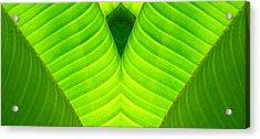 Banana Leaf Abstract 2 Acrylic Print