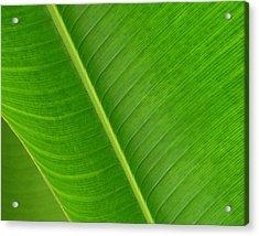 Banana Leaf Abstract Acrylic Print