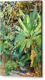 Banana Acrylic Print by Peter Sit