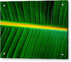 Banana Plant Leaf Acrylic Print