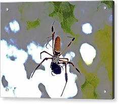 Banana Spider Lunch Time 1 Acrylic Print