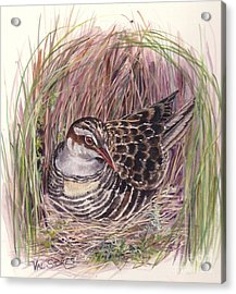 Banded Rail Acrylic Print by Val Stokes
