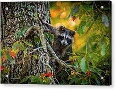Bandit #1 Acrylic Print