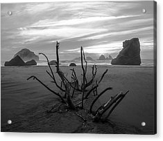 Bandon Beach Tree Acrylic Print