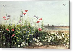 Bank Of Summer Flowers Acrylic Print by Andrew Nicholl