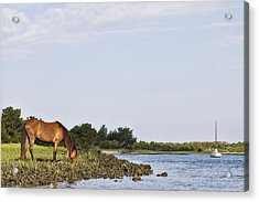 Acrylic Print featuring the photograph Banker Horse Along Taylors Creek by Bob Decker