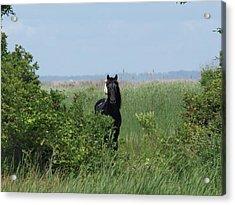 Banker Horse And Egret - Landscape Acrylic Print