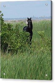 Banker Horse And Egret - Portrait Acrylic Print