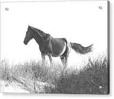 Banker Horse On Dune  1 Acrylic Print