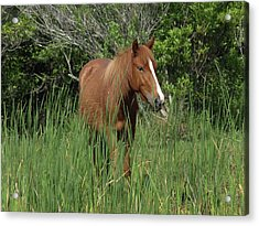 Banker Horses - 10 Acrylic Print