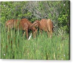 Banker Horses And Egret Acrylic Print