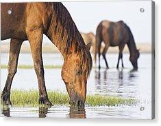 Banker Horses On Tidal Flat Acrylic Print