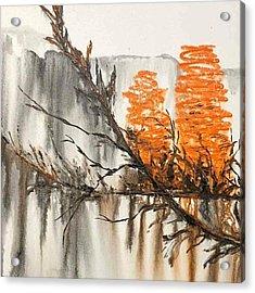 Banksia Acrylic Print