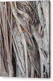 Banyan In Maui Acrylic Print
