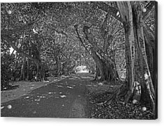 Banyan Street 2 Acrylic Print by HH Photography of Florida