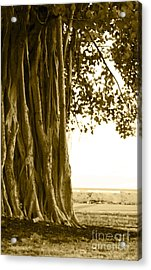 Banyan Surfer - Triptych  Part 2 Of 3 Acrylic Print