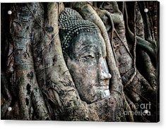 Banyan Tree Buddha Acrylic Print by Adrian Evans