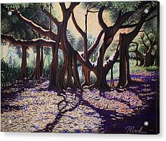 Banyan Tree On Old Cutler Road Acrylic Print by Stephen Mack