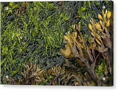 Acrylic Print featuring the photograph Bar Harbor Maine Coastal Life by Kevin Blackburn